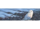 Vantage Point - Snowy Owl Winter - Rear Window Graphic - 020227L