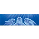 Vantage Point - Three Dolphins - Rear Window Graphic